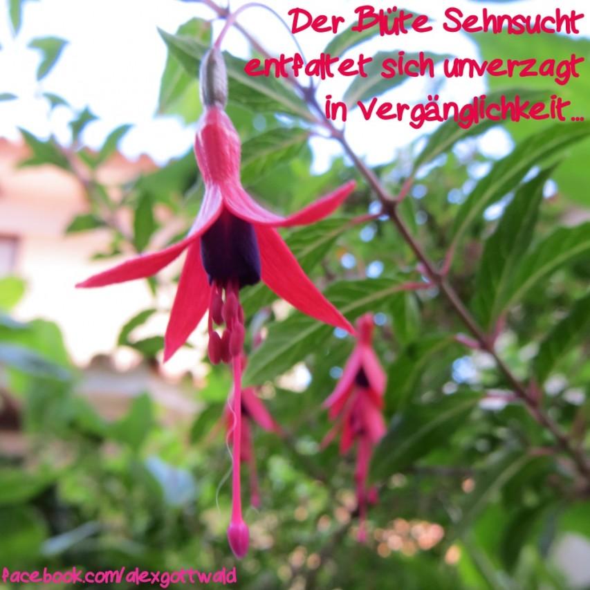 Der Blüte Sehnsucht Haiku Alexander Gottwald