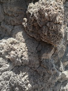 Korallen in 3.500 Metern Höhe Salar de Uyuni Bolivien