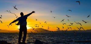 Freiheit-Heilen Dürfen Menschen vergeben? Wachsen Mann Möven Meer